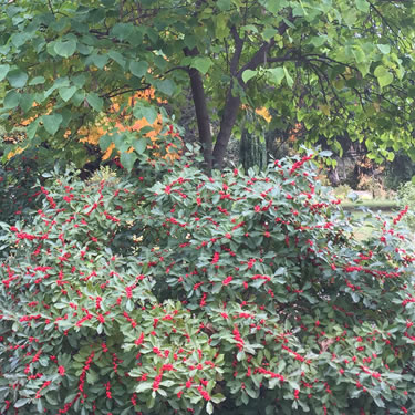 Trees Berries trees-berries.jpg